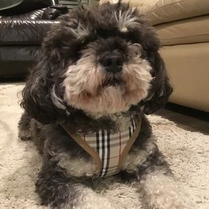 🛍BURBERRY STYLE HARNESS FOR DOG/CAT